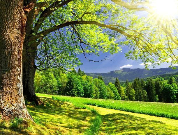 Международный день счастья будет солнечным