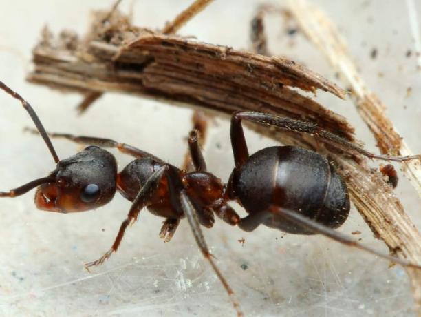 Волжанин подсмотрел за жизнью насекомых