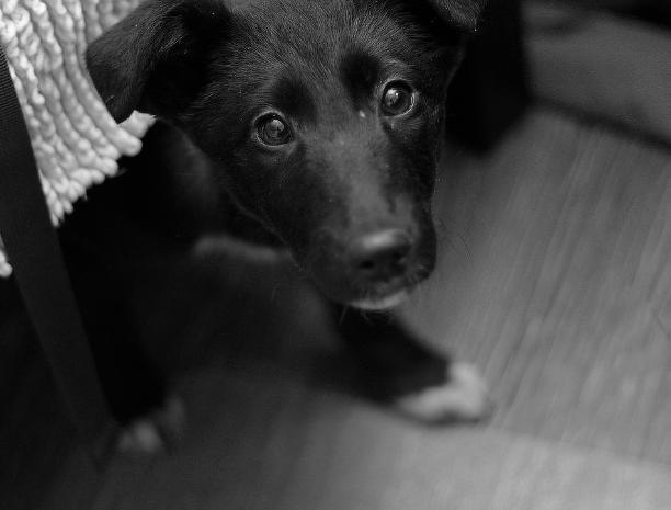 «Собака неделю находится одна взаперти, мы ее подкармливаем»,- волжанка