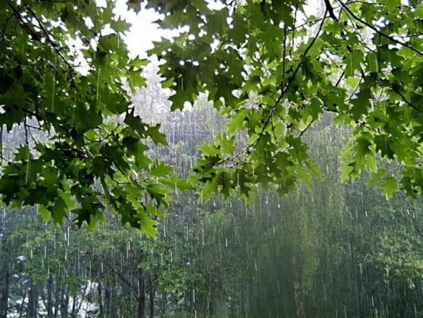 В четверг волжан снова ждет дождь
