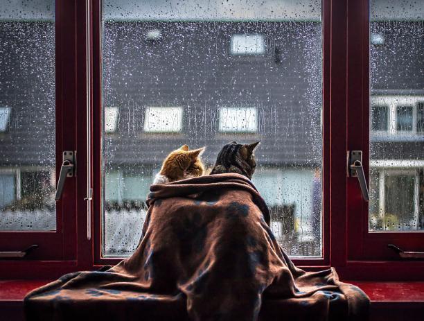 В день фрилансера погода в Волжском намекает оставаться дома