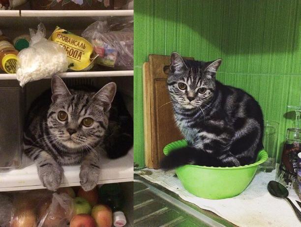 Холодильник и миску для еды облюбовал волжский кот Тимофей в качестве места для отдыха