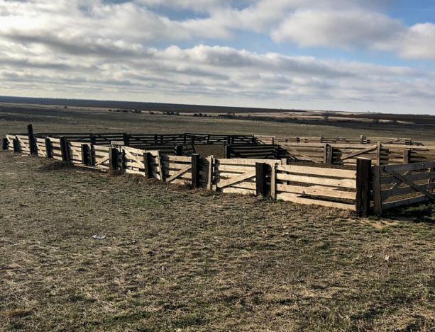 Полиция задержала похитителей овец в области