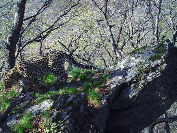 Ученые обнаружили скалу из мультфильма «Король лев»