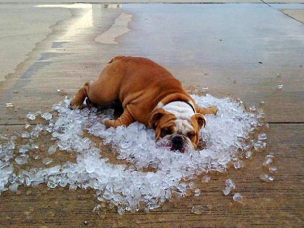 В среду на улицах Волжского будет очень жарко