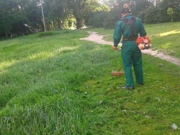 На покос травы в Волжском выделено пять миллионов