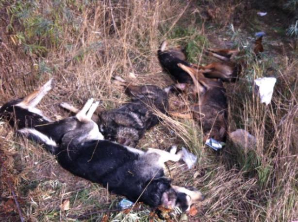 Больше миллиона готова заплатить власть за убийство собак в Волжском