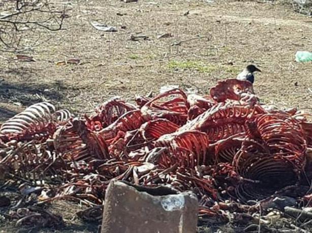 В Волжском вблизи жилых домов обнаружены окровавленные останки