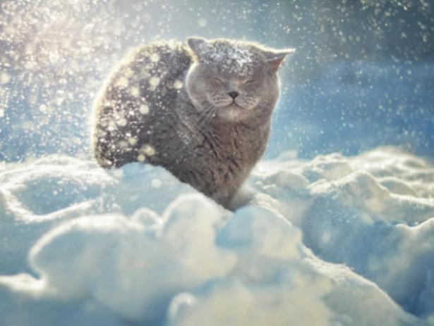 «Зимний» туман опустится на Волжский к концу недели