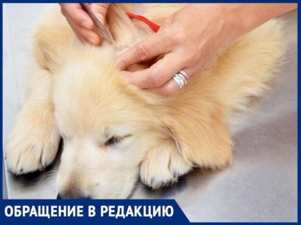 «Клещи атаковали собак»,- волжанка