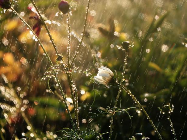 Во вторник в Волжском ожидается дождь