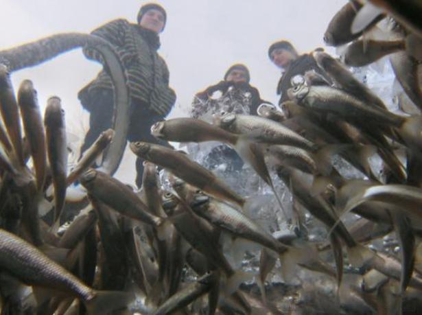 В мужской день волжане будут спасать рыб