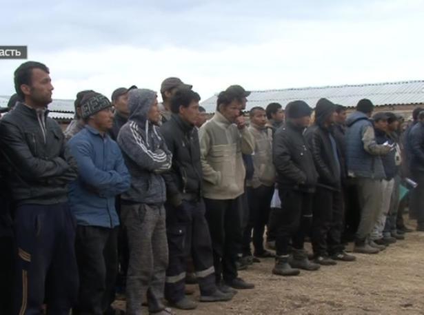 Сотни мигрантов травили овощи опасными химикатами в Волгоградской области
