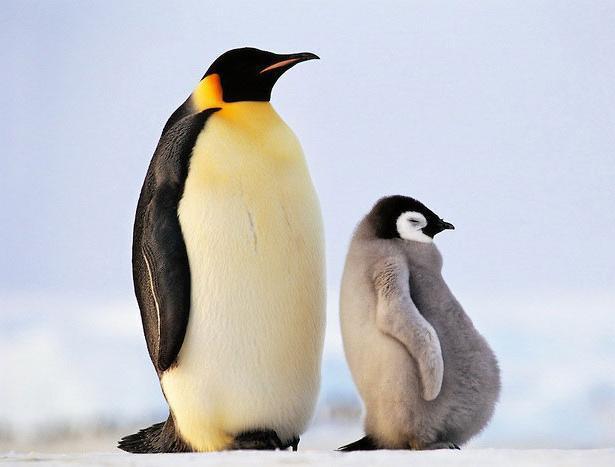 Парень ищет продавца пингвинов в Волжском