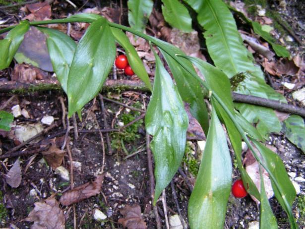 Волжан оштрафовали за торговлю краснокнижным растением
