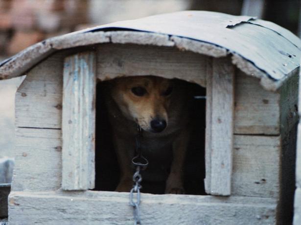 За выдуманное число собак директор организации отлова получил 1 млн рублей