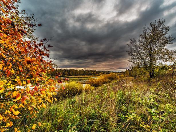 Осенний вторник окутает прохладой