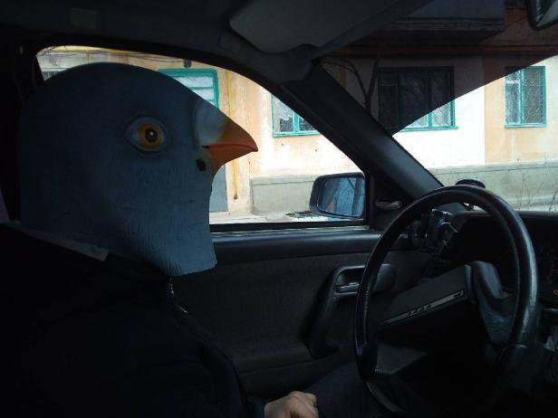Дикий голубь с телом человека пытался подзаработать «семок» в Волжском