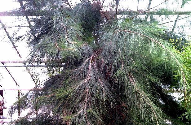 Граждан Волгограда приглашают навстречу сэоловым деревом
