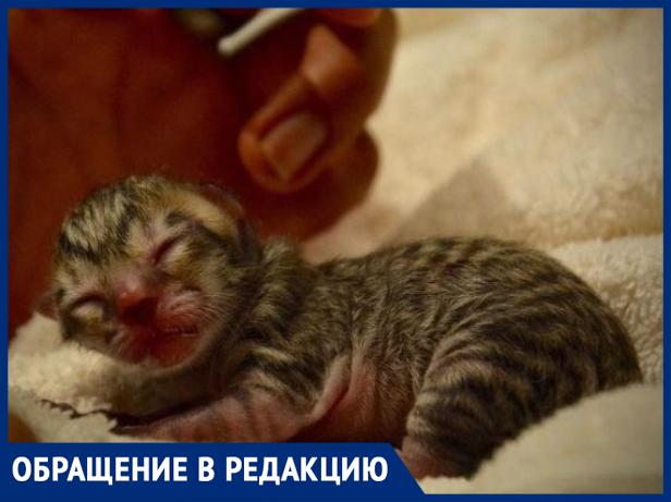 «Сначала котят убивают, а потом людей расчленяют», - волжанка