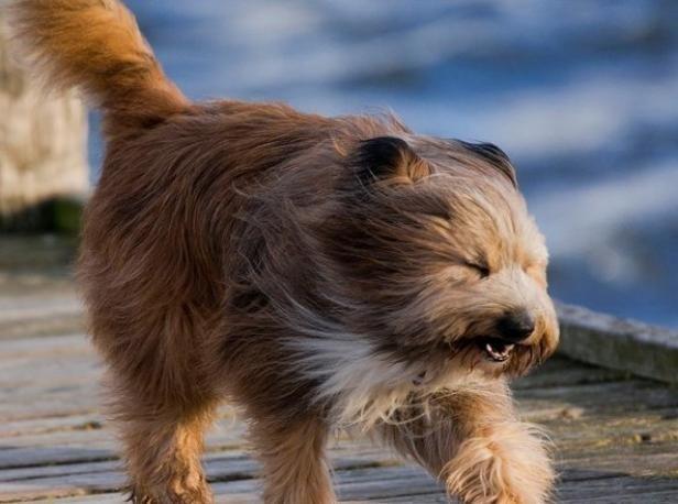 Волжан предупредили об опасности сильного ветра