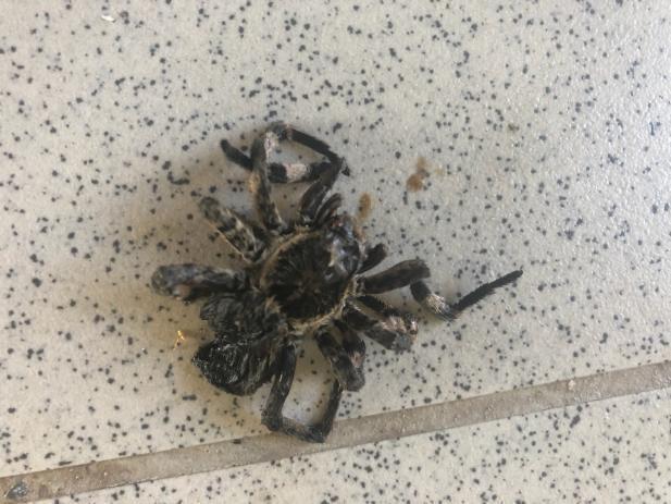 Волжанка обнаружила у своего дома огромного паука