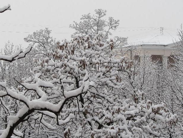 Морозный четверг спрогнозировали в Волжском