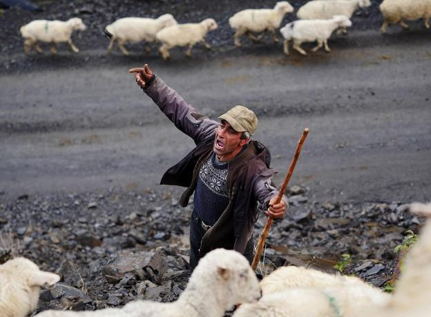 Пастух обокрал хозяина на пять миллионов