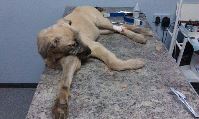 На севере Волгограда догхантеры жестоко избили щенка