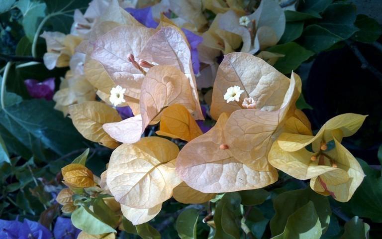 «Бумажные цветы» радуют посетителей ботанического сада Волжского