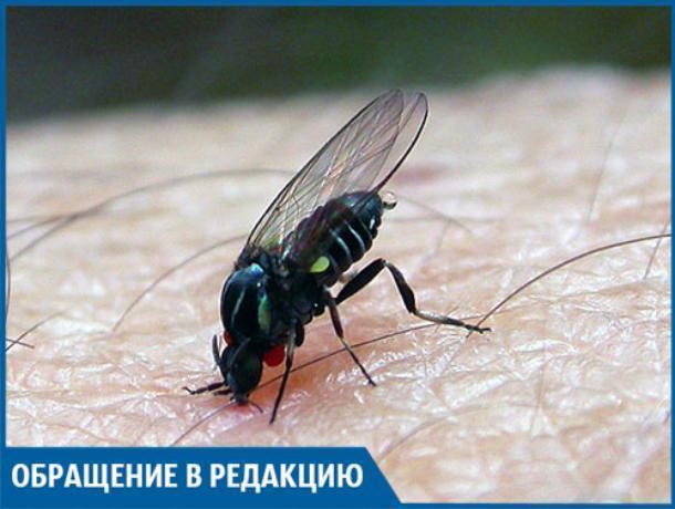 Туча волгоградской мошки прилетела в Волжский, - молодая мама