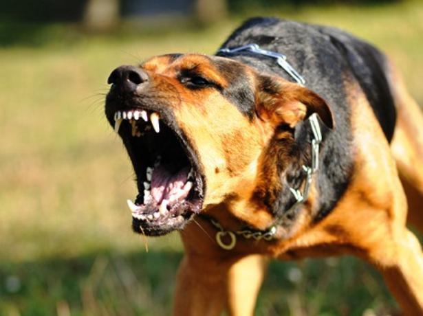 Мэрия Волжского выделила средства на убийство собак