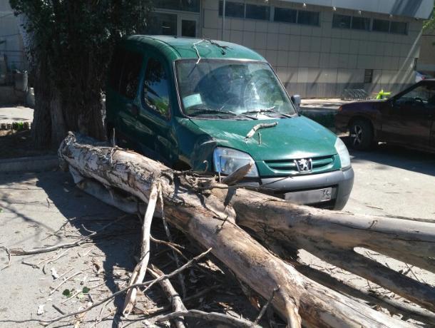 У вокзала в Волжском рядом с авто рухнуло дерево