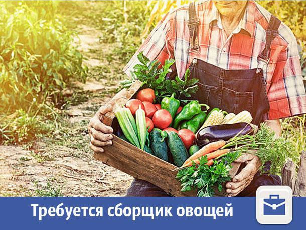 В Волжском предлагают собирать овощи за деньги