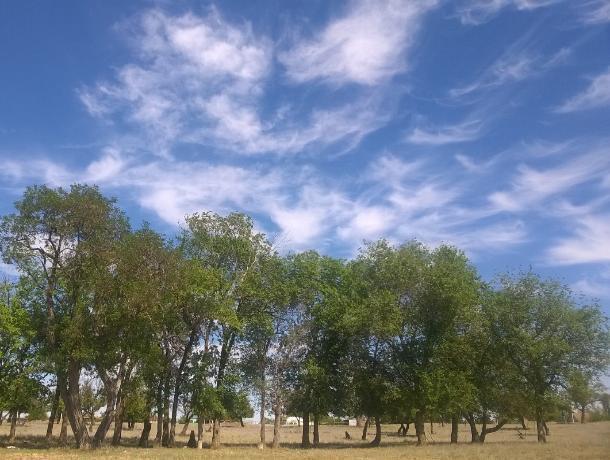 Порывистый ветер спрогнозировали волжанам в солнечный четверг