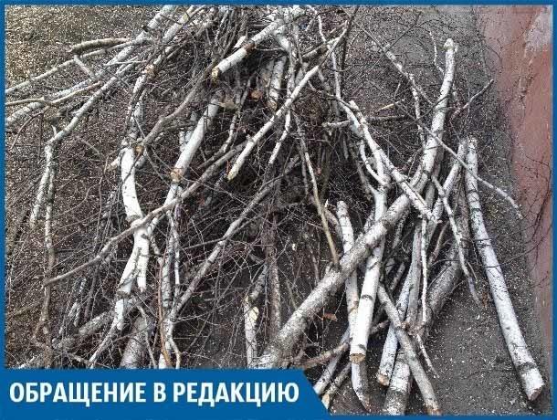 В нашем дворе из-за строительства подстанции спиливают вековые деревья, - волжанин