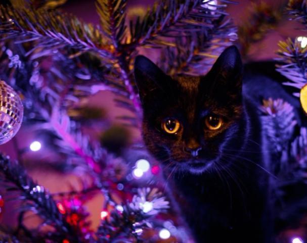 Небольшой «минус» пообещали синоптики волжанам в новогодний день