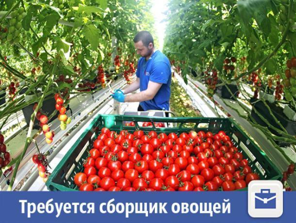 Крупная фирма ищет сборщика овощей в Волжском