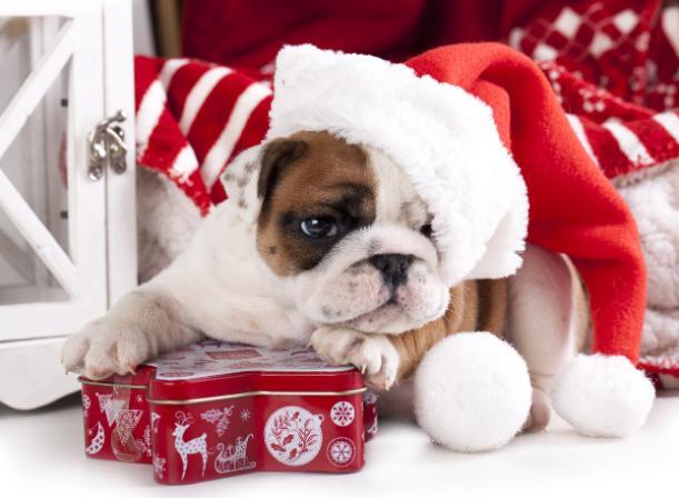 В первый день года собаки синоптики пообещали «ноль»